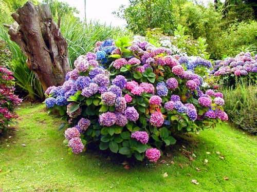 Декоративное садовое растение