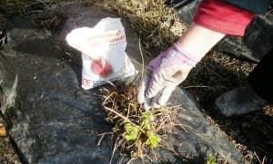 Внесение подкормки в почву