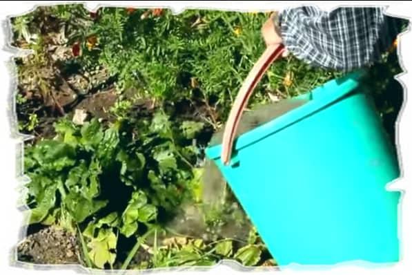 Раствор для подкормки растения