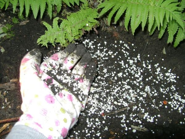 Подкормка для садового грунта