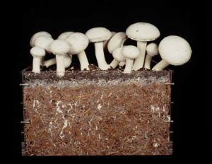 Удобрение для грибницы