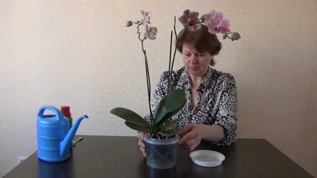 Процесс удобрения орхидеи