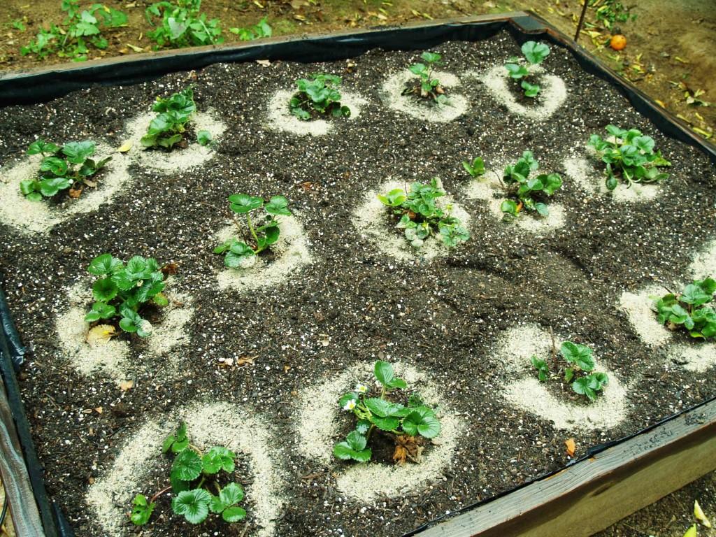 Подпитка для растения из азотосодержащего средства