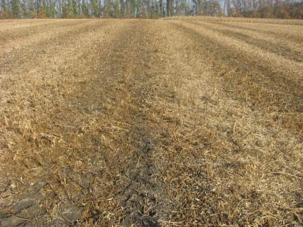 Грунт подкормленный обмолотыми стеблями зерновых культур