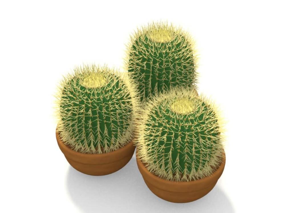 Комнатное растение с колючками