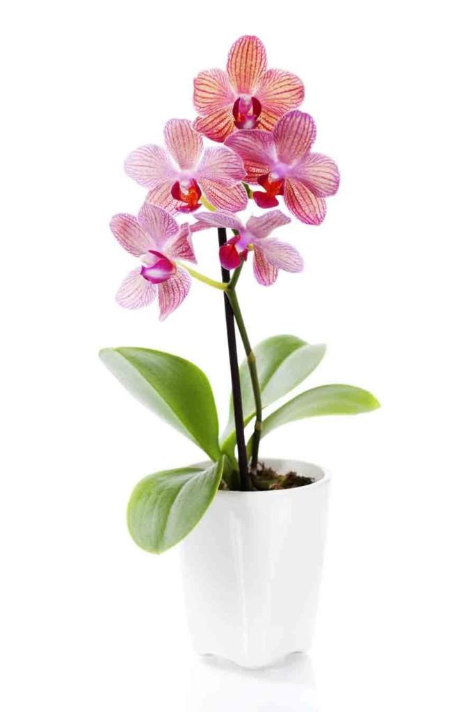 Очаровательный цветок тропических джунглей