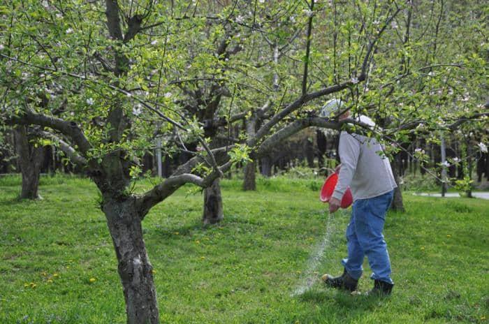 Уход за фруктовым садом