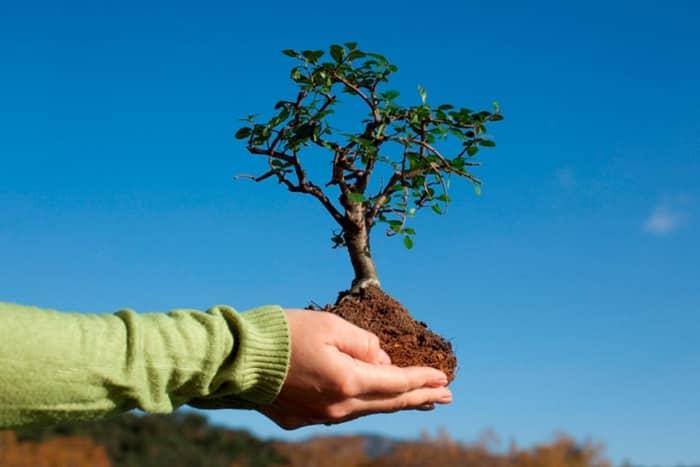 Правильный уход за плодовыми деревьями