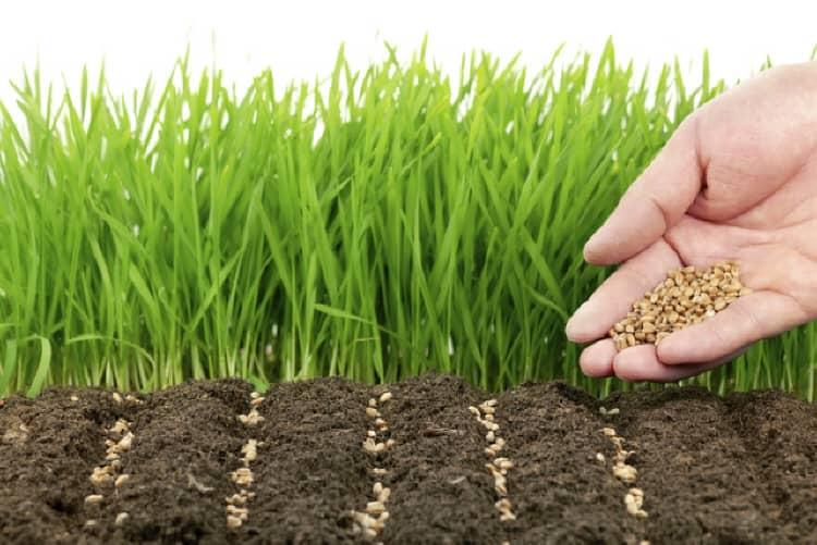 «Зеленое удобрение»