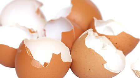 Яичная скорлупа – органическая подкормка