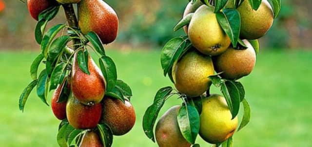 Правильный уход за фруктовым садом – залог отличного урожая