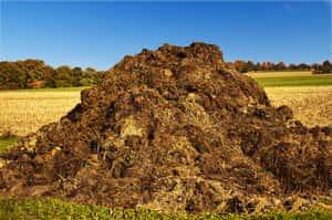 Органическая подкормка грунта