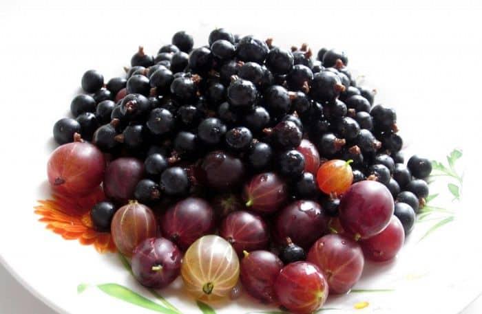 Ягоды плодовых кустарников