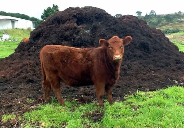 Продукт жизнедеятельности рогатого скота
