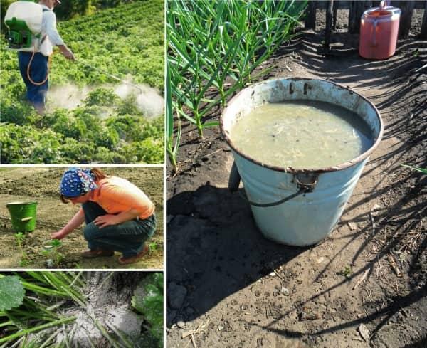 Внесение органики в почву
