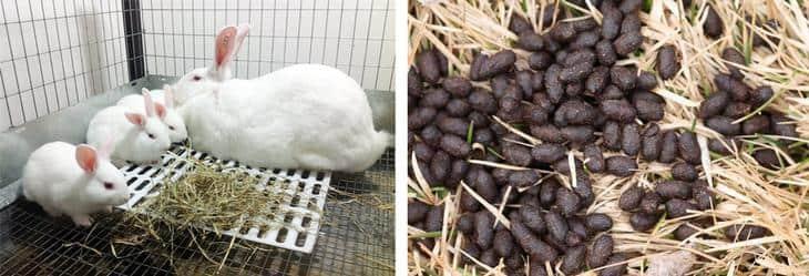 Продукт жизнедеятельности кроликов