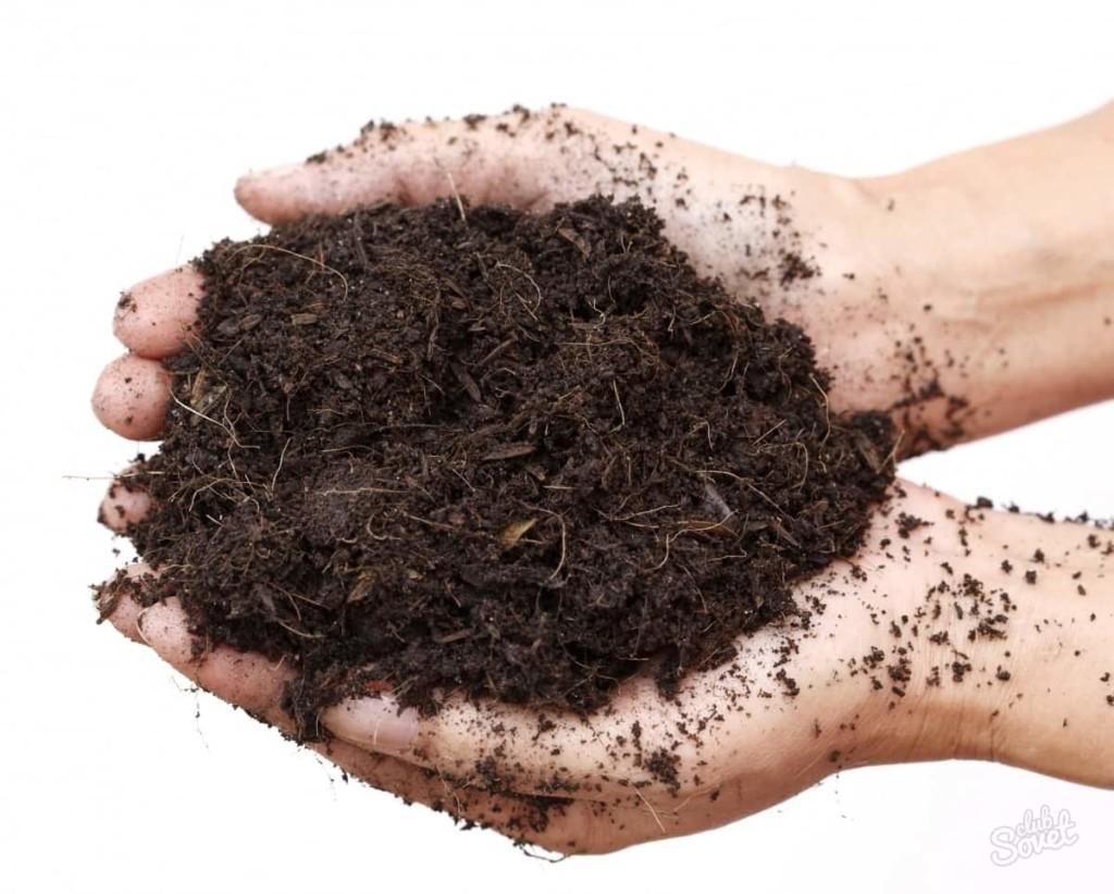 Перепревшие остатки растений и почва