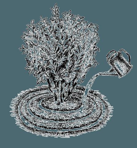 Внесение подкормок в почву