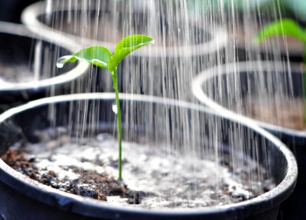 Внесение питательных веществ в почву