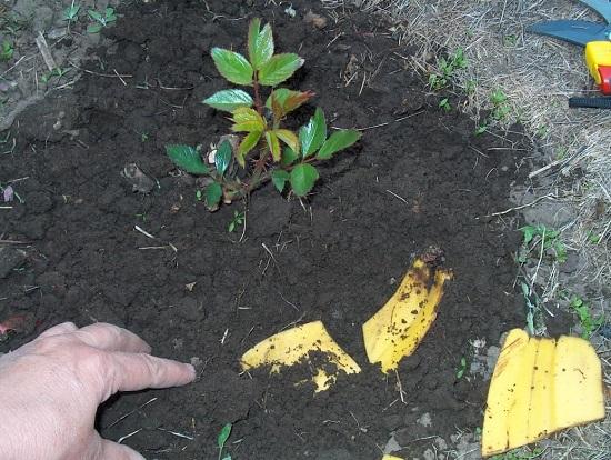 Внесение органической подпитки в почву