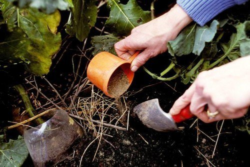 Внесение природной подкормки в почву
