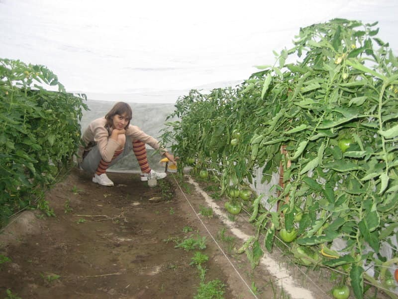 Внесение органического удобрения