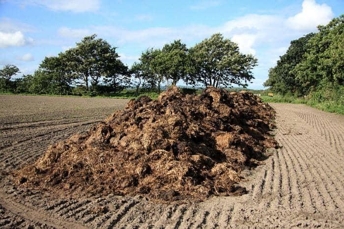 Внесение органической подкормки в почву