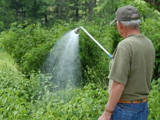 Уход за садовыми растениями