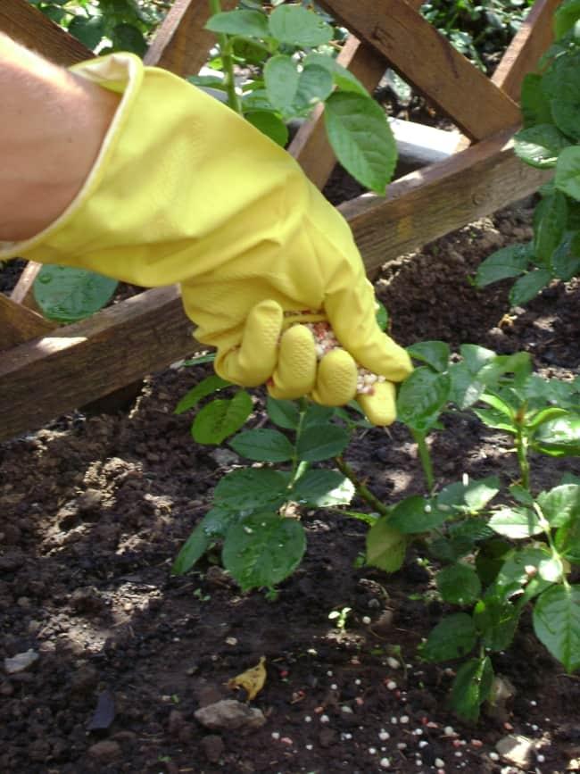 Обработка овощных культур