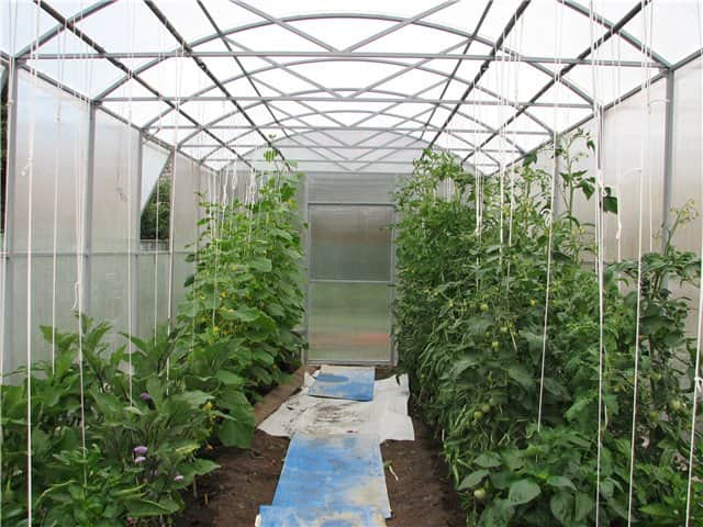 Содержание овощных культур в теплице