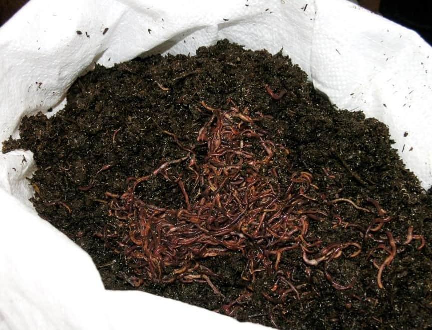 Перегнившие частицы различных растений