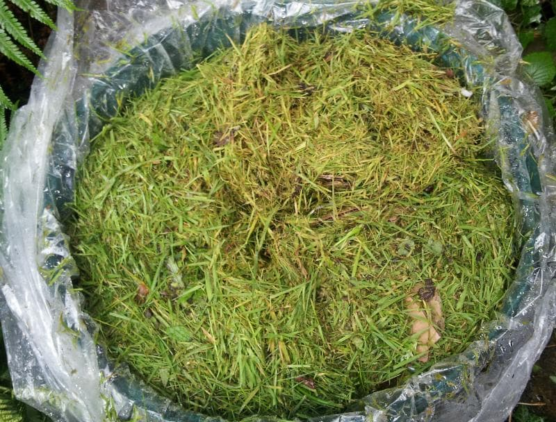 Приготовление травяных настоев