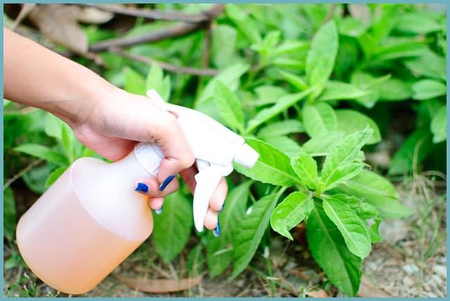 Внекорневое удобрение растений