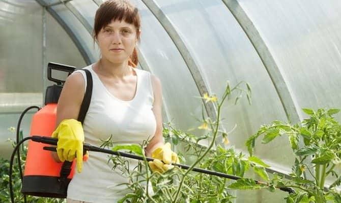 Внекорневое питание для растений