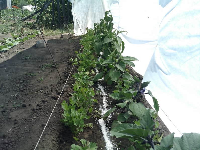 Внесение мочевины для развития растений