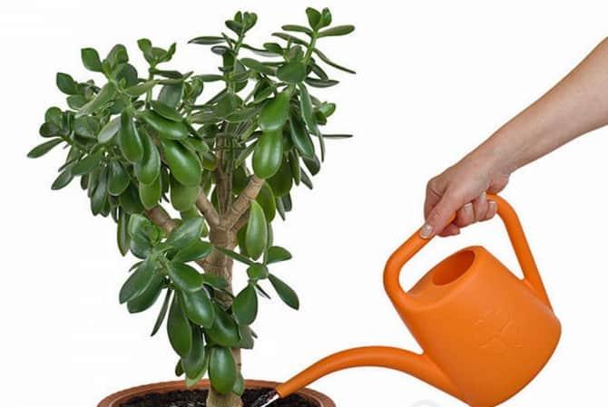 Внесение удобрений под растение.