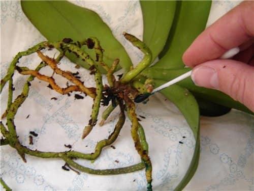 Обработка растения веществом