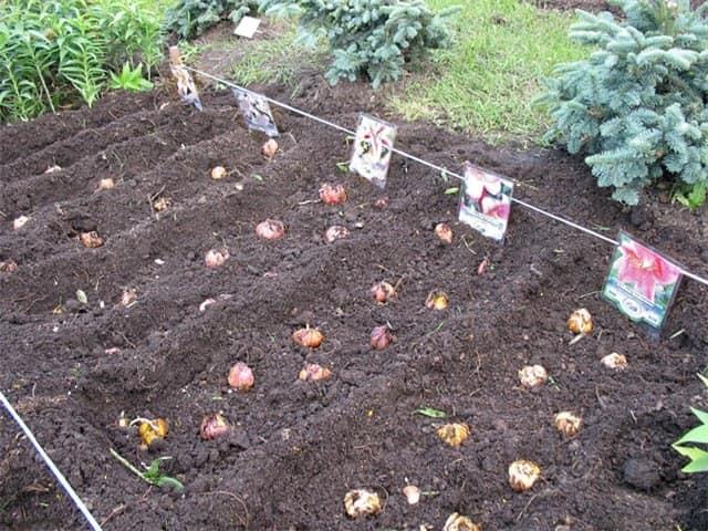 Рыхление почвы и подкормка цветов