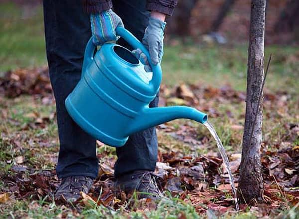 Как подкармливать садовые деревья