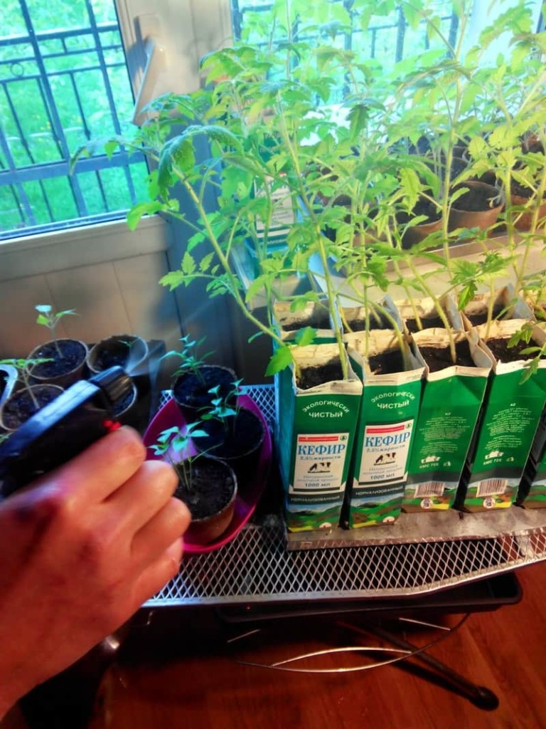 Уход за растениями при внекорневых подкормках