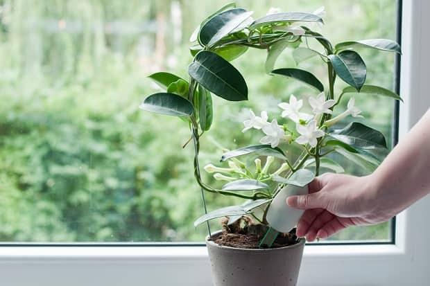 Польза золы для цветов