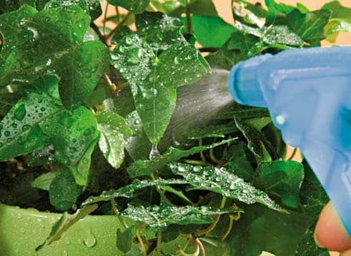 Применение удобрений на огороде