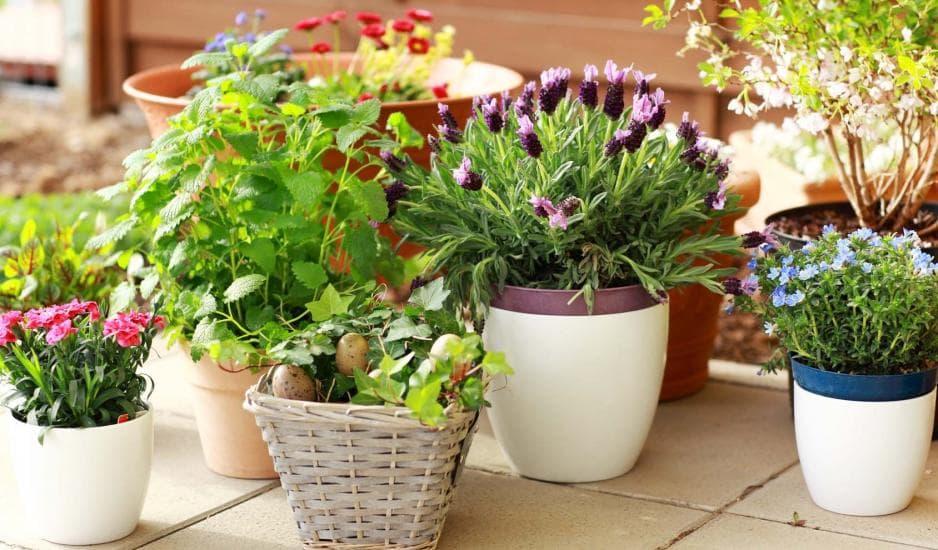 Нежелательные цветы для дома