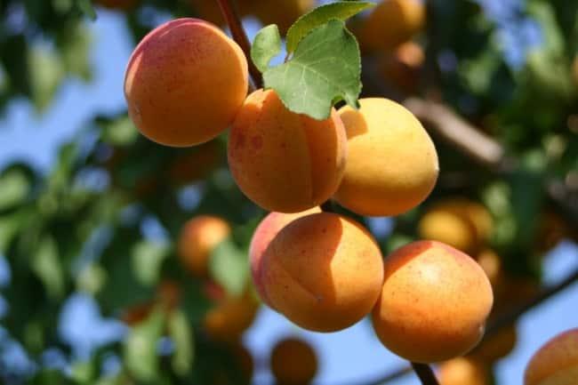 Хороший урожай зависит от правильной подкормки