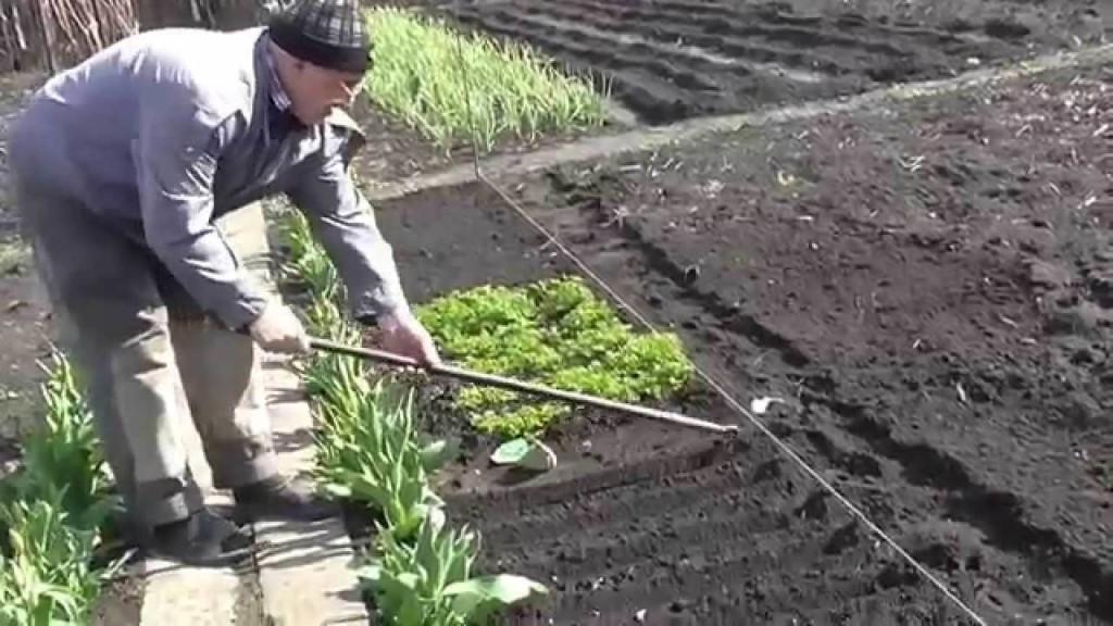 Садить фенхель желательно как отдельный вид растений, тогда за ним лучше ухаживать.
