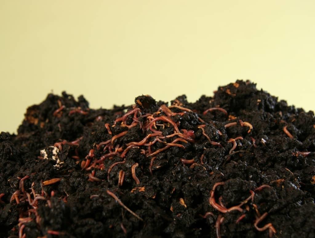 Перекапывание почвы и внесение удобрений