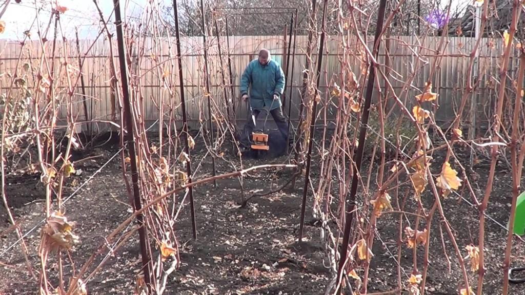 Рыхление почвы под виноградниками