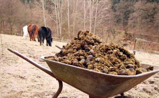 Конский навоз желательно использовать лишь для подкормки грунта на зиму