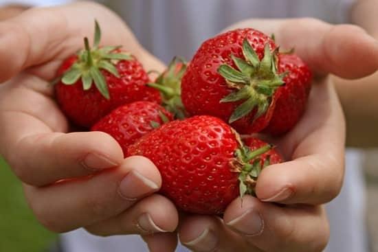 Вкусные ягоды результат плодотворных трудов
