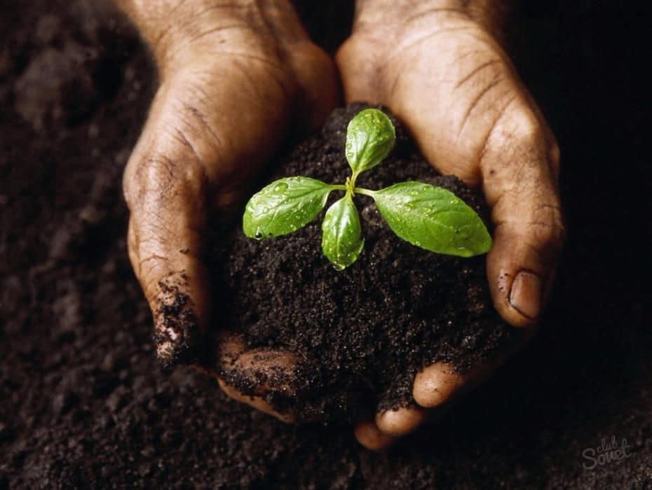 Перегной как удобрение как использовать
